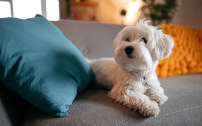 How To Make Apartment Living Easier On Your Puppy